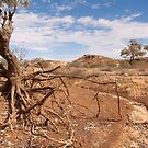 Dry country by Blue Gum Pictures