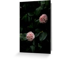 Pink camelias Greeting Card