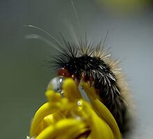 Caterpillar  by Jon Staniland