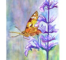 PAINT THIS PHOTO ! - PAINTED LADY (challenge) Photographic Print