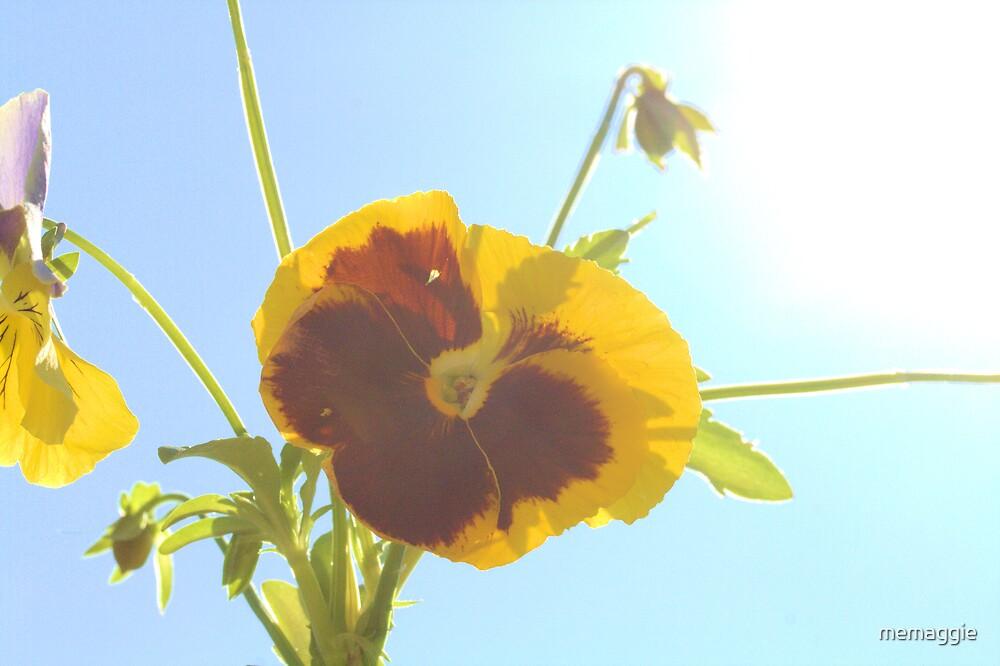 good morning sunshine by memaggie
