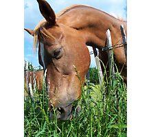 Yummy Grass Photographic Print