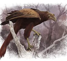 Sapeornis by Jeff Powers Illustration