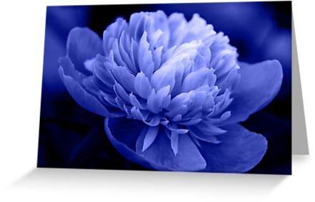 Blue Peony by Sandy Keeton