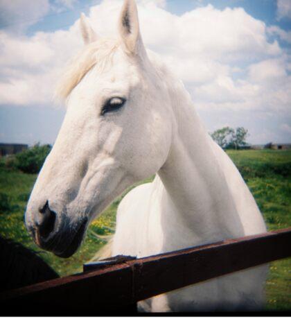Holga White Horse Sticker