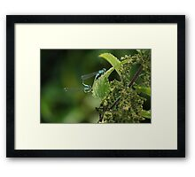 Pair Of Dragon Flys Framed Print
