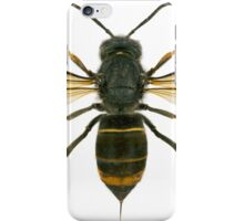 Cute Asian Giant Hornet