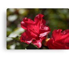 Red Rhododendron Flowers Canvas Print