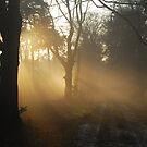 Winterlight mystery by jchanders