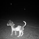 Little puppy on a big dark field by Teresa Schultz
