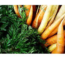 Fresh Carrots Photographic Print