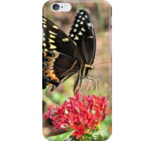 Eastern Tiger Swallowtail iPhone Case/Skin