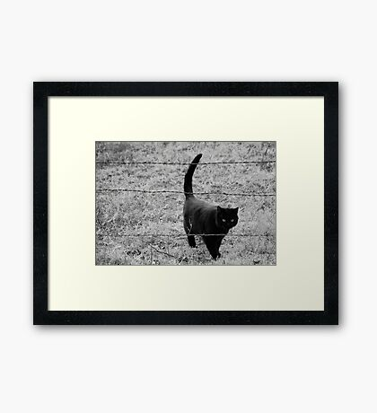Through the Barb Wire Framed Print