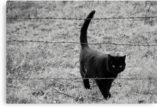 Through the Barb Wire by Suz Garten
