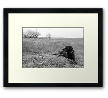 Labrador in Field Framed Print