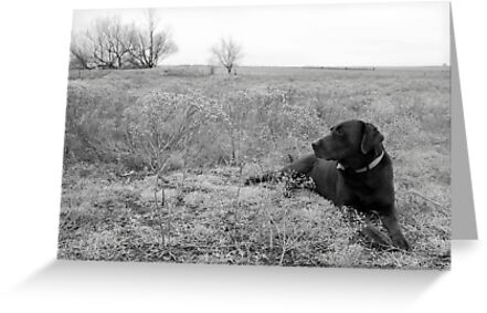 Labrador in Field by Suz Garten