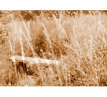 Lost in Tall Grass. Photographic Print