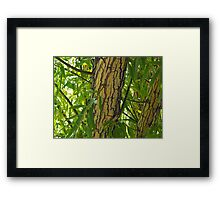 Bark, on an Oz willow Framed Print