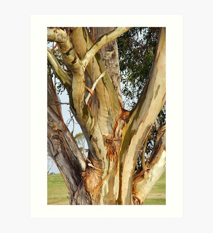 Gum Tree Colours Art Print