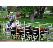 Herding the Steer Back to the Pen Photographic Print