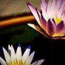 Lotus by lisacred