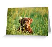 Labrador in Kansas Pasture Greeting Card