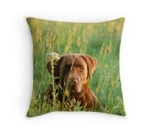 Labrador in Kansas Pasture Throw Pillow