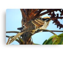Brush Cuckoo Juvenile Canvas Print