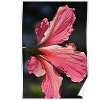 Stunning Hibiscus Poster