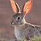 Peter Rabbit? Mrs.Cottontail? The Bunny Challenge!