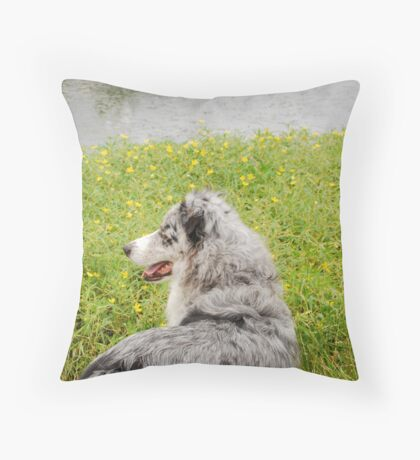 Australian Shepherd Gazes at Pond Throw Pillow