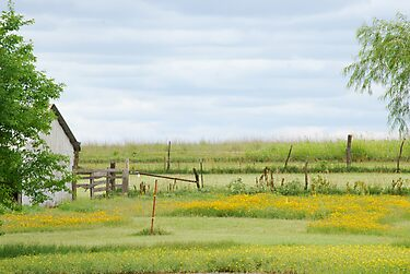 Kansas Country Solitude by Suz Garten