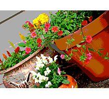 Flower Pots Photographic Print
