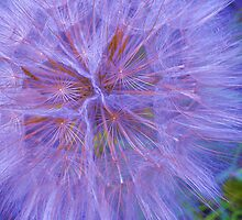 blue puff by Linda Bianic
