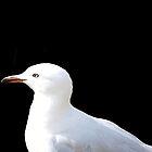 Seagull by Kylie Van Ingen