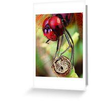 Dragon Fly macro Greeting Card