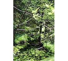 Fairy place  Photographic Print