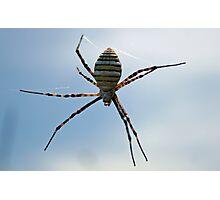 Okavango Delta Spider Photographic Print