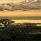 Ploughed fields and camel-thorn trees by Fineli