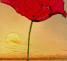 Poppy Sunset by Lea Valley Photographic