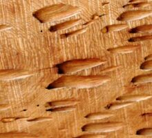 Pecky Cypress Sticker