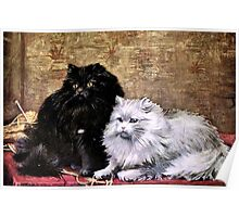 Persian Cats Painting Poster