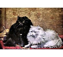 Persian Cats Painting Photographic Print