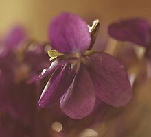 in violet dreams by narelle sartain