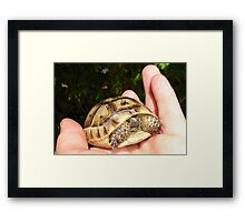 Turkish Tortoise - You're A Babe  Framed Print