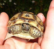Ibera Greek Tortoise - You're A Babe by taiche