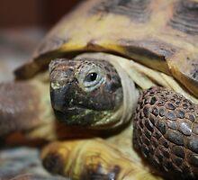 Tibby Tortoise by Keala