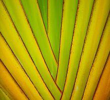 Hawaiian Palm Bark by Angelina Hills