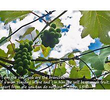 John 15-5 Photographic Print