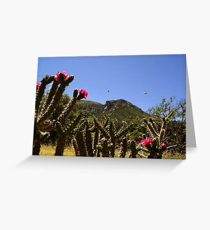 Cactus Blooms & UFO's Greeting Card